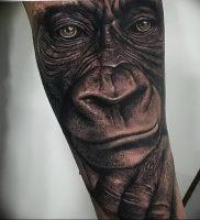 фото тату горилла от 27.03.2018 №123 — gorilla tattoo — tattoo-photo.ru