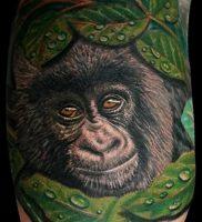 фото тату горилла от 27.03.2018 №129 — gorilla tattoo — tattoo-photo.ru