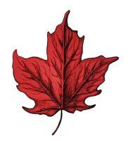 фото тату кленовый лист от 14.04.2018 №088 — maple leaf tattoo — tattoo-photo.ru