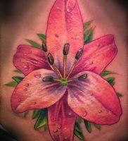 фото тату королевская лилия от 08.04.2018 №001 — tattoo royal lily — tattoo-photo.ru