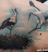 фото тату аист от 18.04.2018 №008 — tattoo stork — tatufoto.com