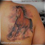 фото тату лошадь 24.12.2018 №003 - photo horse tattoo - tattoo-photo.ru