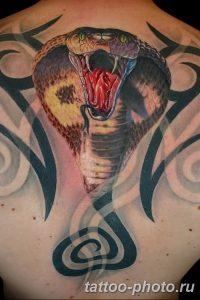 Фото рисунка тату змея 23.11.2018 №007 - snake tattoo photo - tattoo-photo.ru