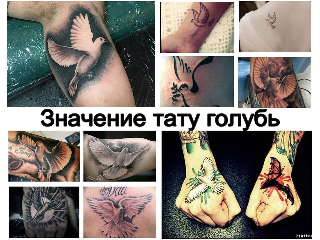 Значение тату голубь - оригинальная коллекция рисунков татуировки на фото