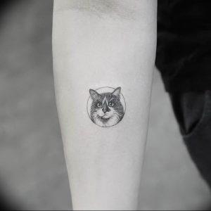 Фото рисунка тату кошка 09.10.2018 №197 - cat tattoo - tattoo-photo.ru