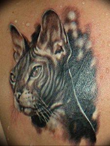 Фото рисунка тату кошка 09.10.2018 №223 - cat tattoo - tattoo-photo.ru