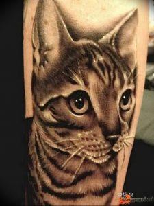 Фото рисунка тату кошка 09.10.2018 №319 - cat tattoo - tattoo-photo.ru