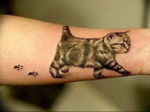 Фото рисунка тату кошка 09.10.2018 №339 - cat tattoo - tattoo-photo.ru