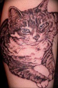 Фото рисунка тату кошка 09.10.2018 №341 - cat tattoo - tattoo-photo.ru