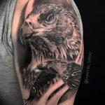 Фото тату беркут 10.10.2018 №066 - tattoo eagle - tattoo-photo.ru