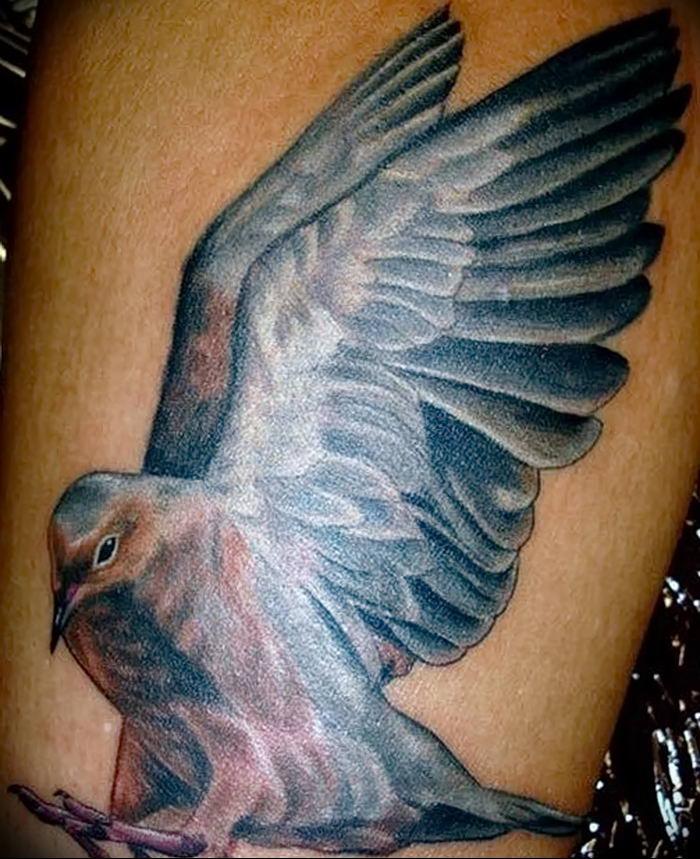Картинка тату голубь