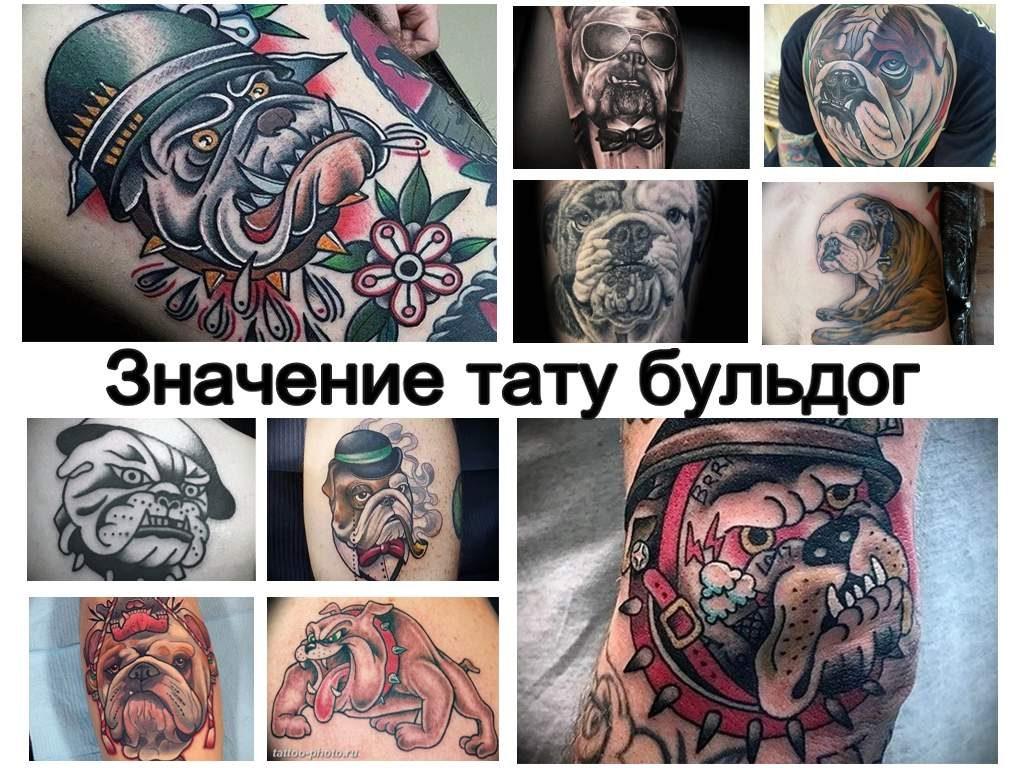 Значение тату бульдог - информация про особенности рисунка и фото примеры готовых татуировок