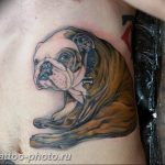 Фото тату бульдог 27.02.2019 №007 - Photo tattoo bulldog - tattoo-photo.ru