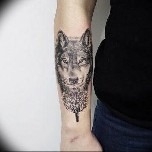 Фото тату волк 20.05.2019 №046 - photo tattoo wolf - tattoo-photo.ru
