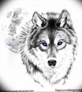 Фото тату волк 20.05.2019 №063 - photo tattoo wolf - tattoo-photo.ru