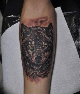 Фото тату волк 20.05.2019 №206 - photo tattoo wolf - tattoo-photo.ru