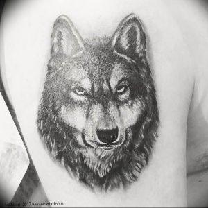 Фото тату волк 20.05.2019 №241 - photo tattoo wolf - tattoo-photo.ru