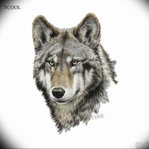 Фото тату волк 20.05.2019 №265 - photo tattoo wolf - tattoo-photo.ru