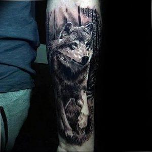 Фото тату волк 20.05.2019 №300 - photo tattoo wolf - tattoo-photo.ru