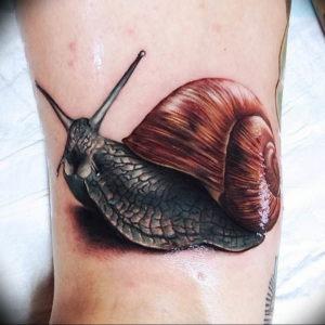 Фото тату улитка 28.07.2019 №107 - snail tattoo - tattoo-photo.ru
