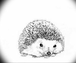 Photo ежик тату эскиз 31.07.2019 №007 - hedgehog tattoo sketch - tattoo-photo.ru
