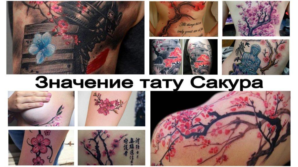Значение тату Сакура - все про особенности рисунка и коллекция фото примеров готовых тату